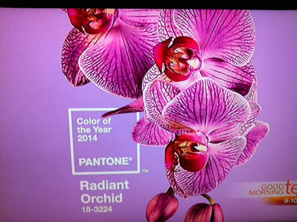 Pantone , color of the year !!!  (1/5)